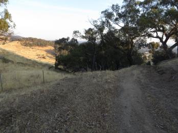Early sun ahead of Brennans Tunnel hill.